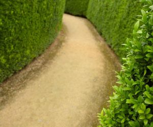 Maze-Path